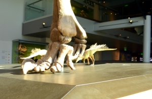 Where T-Rex practices ballet.